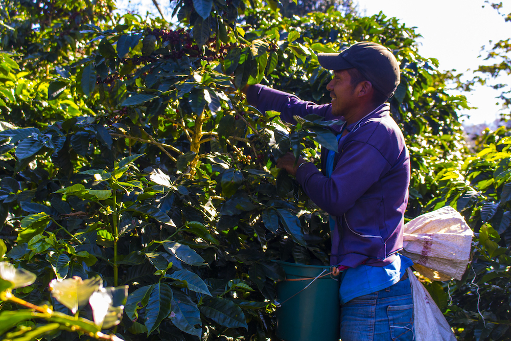 Azul Kaffee – Nachhaltig hochwertig